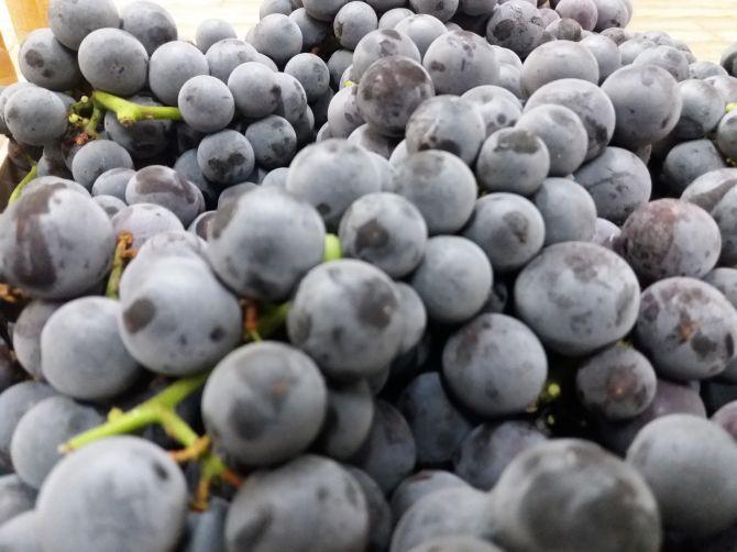 Sorbetto all'uva fragola